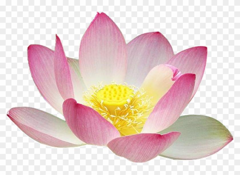 Lotus Flower Emoji Iphone - Flowers Healthy