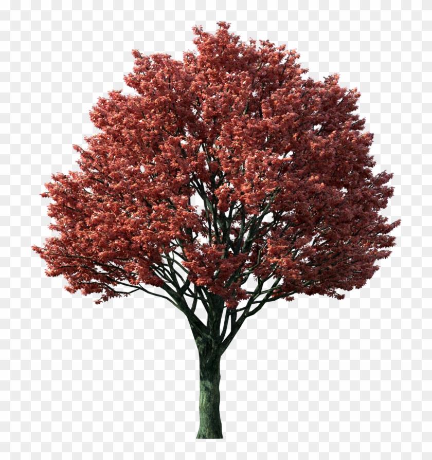 Fall Maple Tree Clip Art