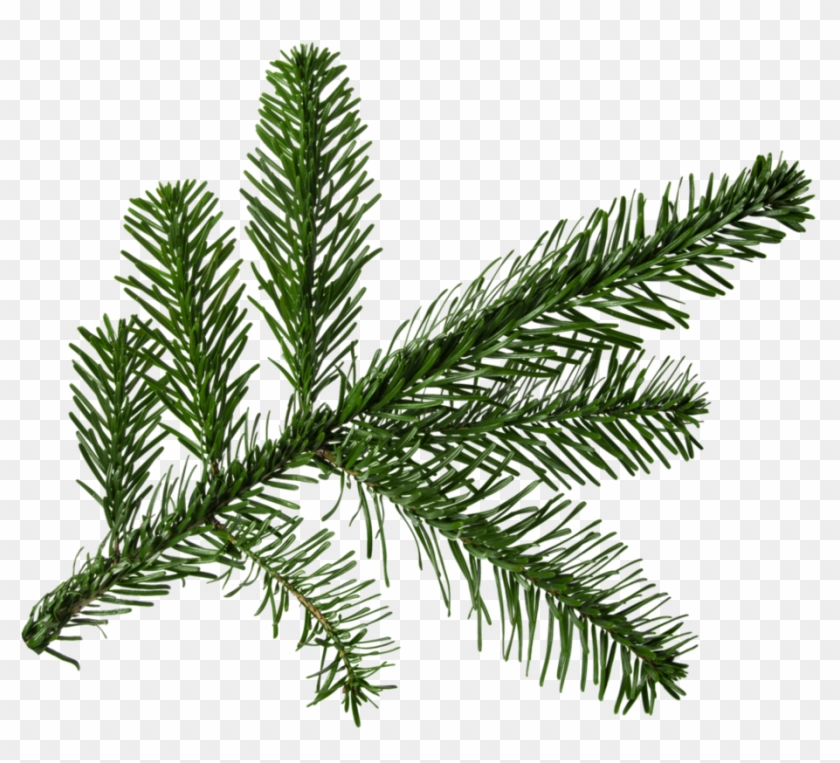 Christmas Branch Png.Fir Branch Png For Tree Christmas Branch Png Transparent