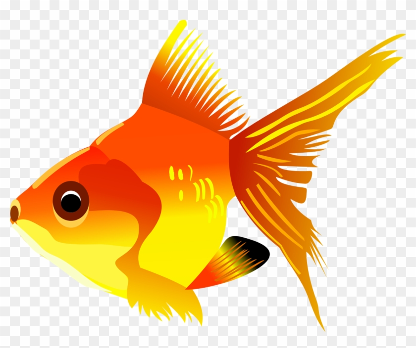 Goldfish Koi Cartoon Drawing Fish Clipart Transparent Background Hd Png Download 948x750 13146 Pngfind