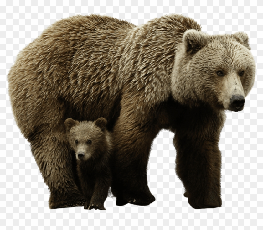Free Png Download Bear Png Images Background Png Images Brown Bear Png Transparent Png 850x683 16026 Pngfind On this page you can download free png images and pictures with transparent backgrounds with bears, bear png free image. free png download bear png images