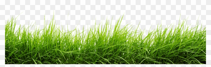 Line Of Grass Png Image Grass Png Transparent Png 3000x816 16081 Pngfind