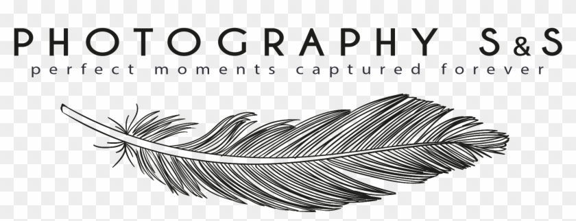 Wedding Photography Transparent Photography Logo Png Hd Png Download 2034x722 18400 Pngfind