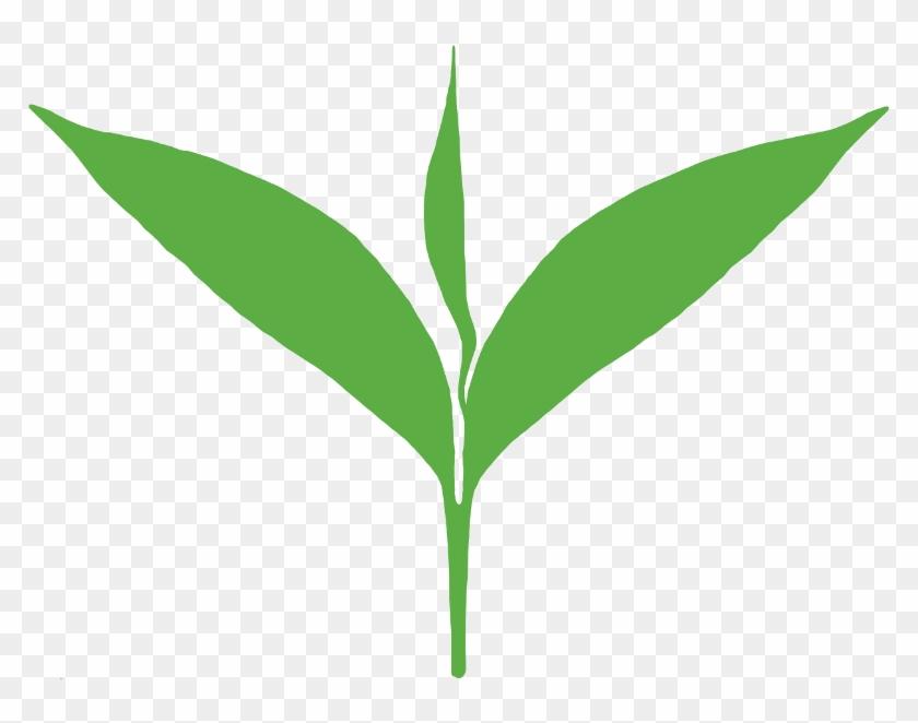 Green Leaves Clipart Tea Leaf Tea Leaf Logo Png Transparent Png 800x800 1046780 Pngfind