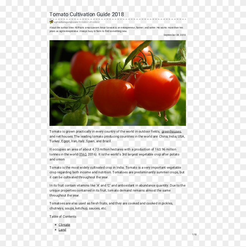 Pdf - Tomato, HD Png Download - 595x842(#1066265) - PngFind