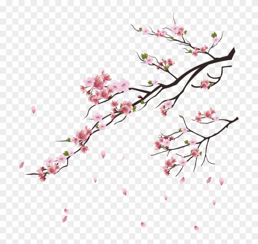 Png Cherry Blossom Tree Transparent Png 715x715 1097335 Pngfind