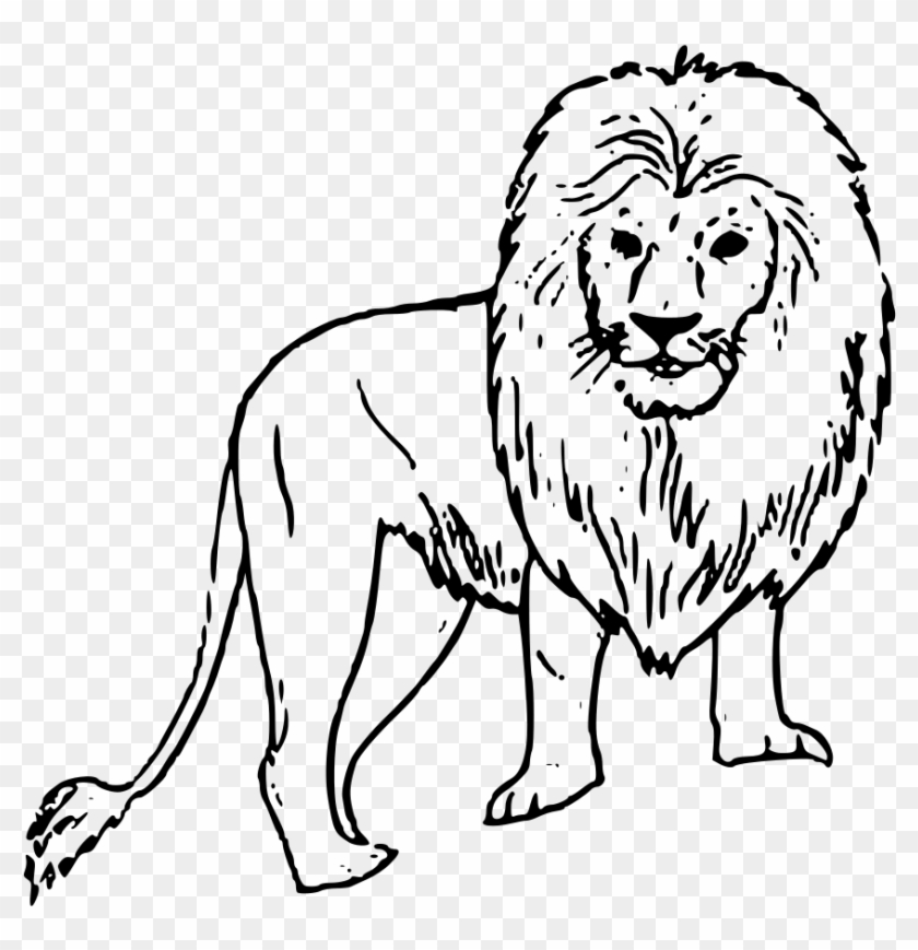 File Lion Clipart Svg Easy Drawings Of Wild Animals Hd Png Download 1024x1024 1193593 Pngfind The screen you see when your computer has finished starting up is called the desktop. file lion clipart svg easy