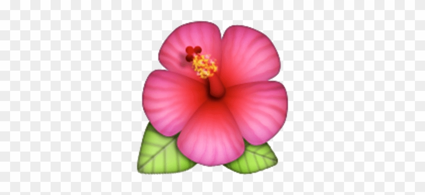 Hawaiian Flower Emoji Png Transparent Png 640x480128520 Pngfind