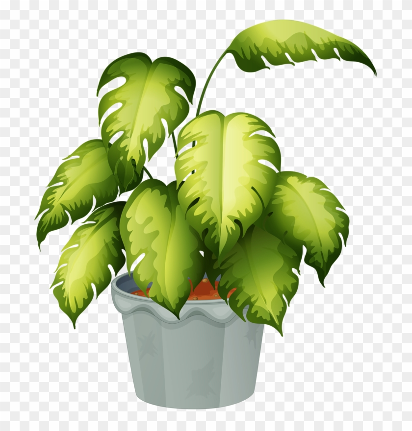 Potted Plant - Flowering And Non Flowering Plants Chart, HD ... on green house plants, purple house plants, blue house plants, lavender house plants, tropical house plants, moss house plants, orange house plants, evergreen house plants, easy to take care of house plants, cacti house plants, flowers house plants, dead house plants, perfect house plants,