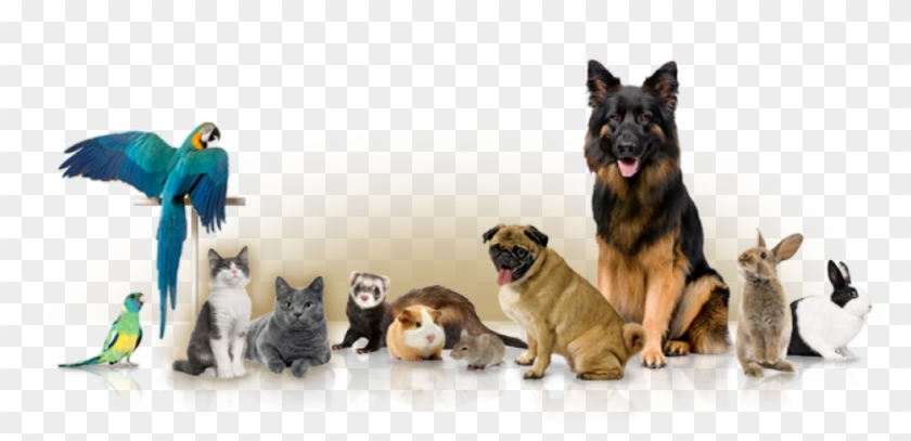 And Private In Home Boarding Services Different Pets Hd Png Download 960x420 1353764 Pngfind