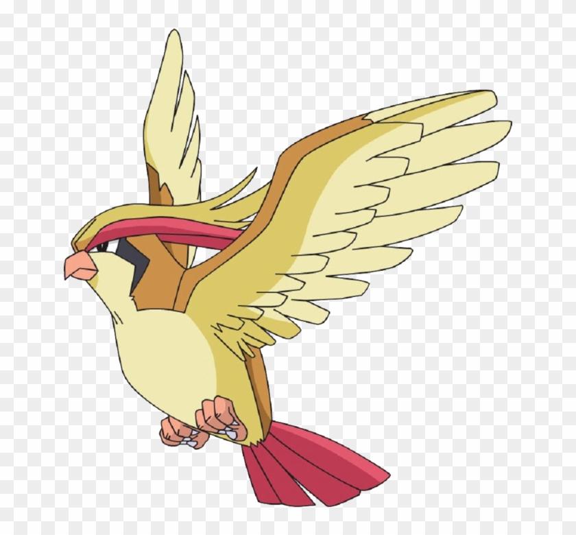 Pidgeot Pidgeot Png Transparent Png 900x900 1359890