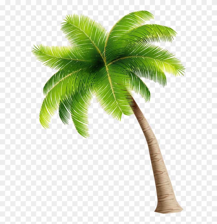 Make A Splash With The Family Coconut Tree Clipart Png