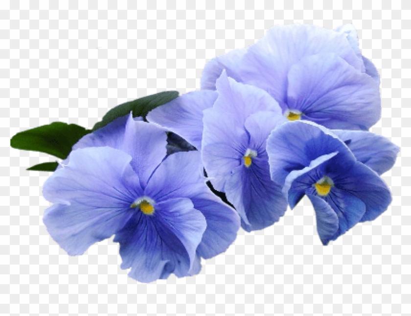 Free Png Download Blue Violet Flower Png Images Background ...