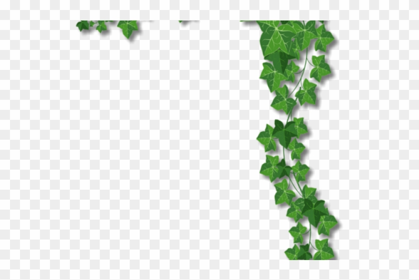 Ivy Clipart Corner Ivy Border - Vines Page Border