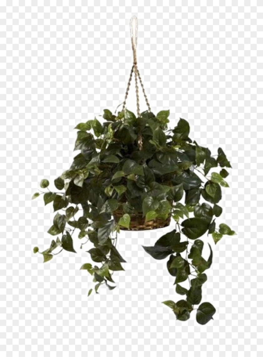 Aesthetic Plant Green Png Niche Hanging Philodendron Transparent Png 1024x1340 1687744 Pngfind