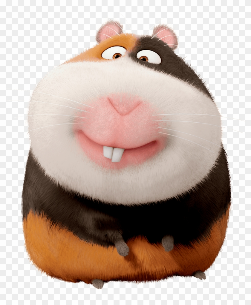 Secret Life Of Norman Pets Characters Guinea Pig From Secret Life Of Pets Hd Png Download 894x1140 1721613 Pngfind