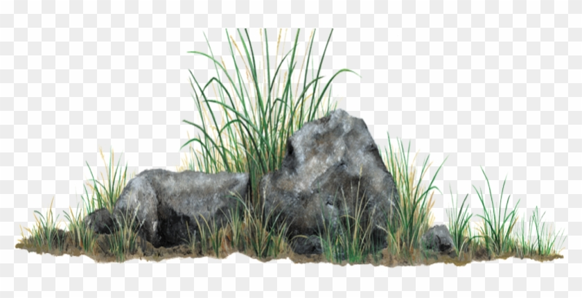 Piedra Grass Photoshop, Tree Photoshop, Tree Psd, Render