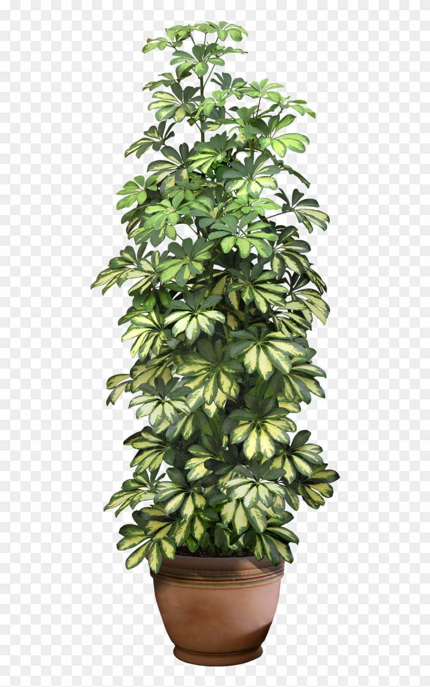 0 9ddb1 5c7a292c Xxl Planting Shrubs, Interior Plants ... on