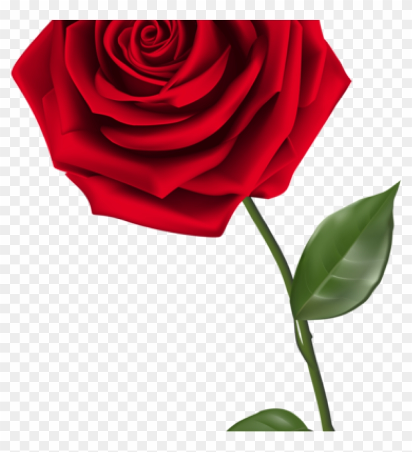 Rose transparent background. Single clipart red png