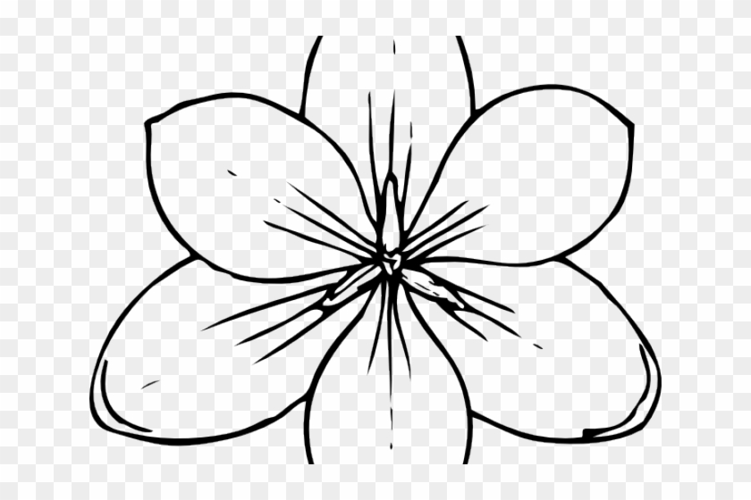 Drawn Hawaiian Flowers Pumpkin Flower Coloring Pages Hd Png Download 640x480 1777535 Pngfind