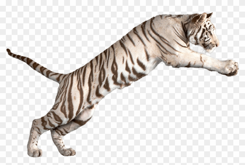 Jumping White Tiger - White Tiger Transparent Background, HD