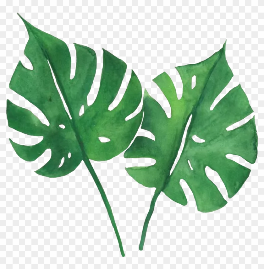 Watercolor Tropical Leaves Tutorial Hd Png Download 1024x997 184976 Pngfind