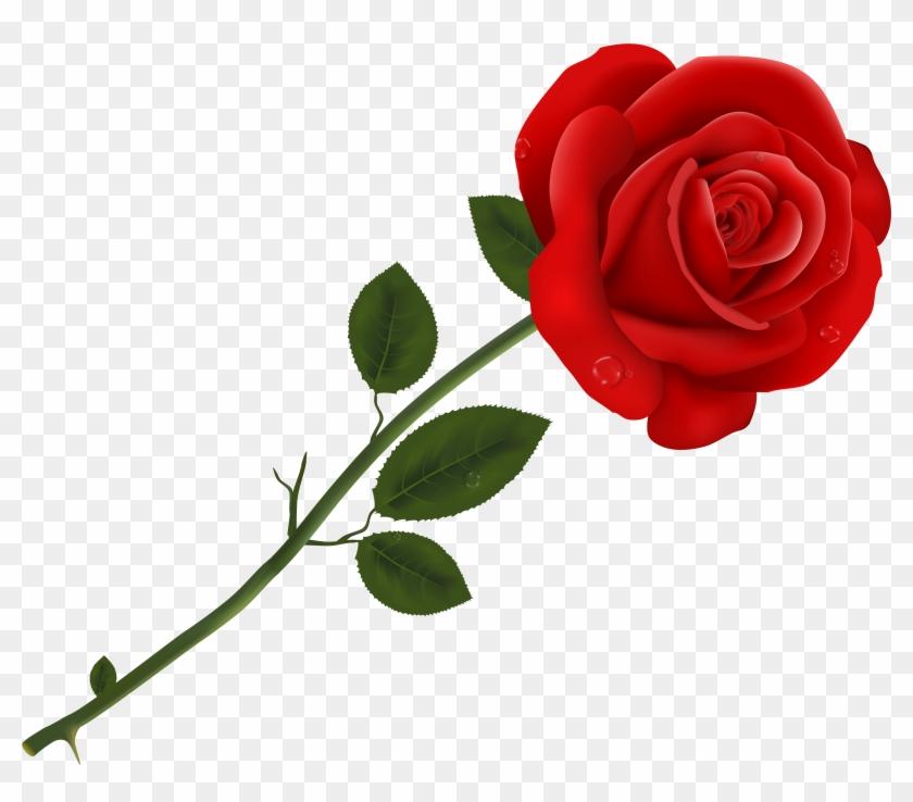Rose Earth Desktop Wallpapers Transparent Background Rose