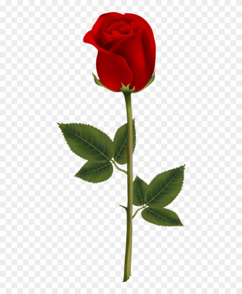 Transparent Background Red Rose Png