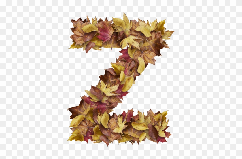 Letter Z From Dry Leaves - Prince Of Wales Feathers, HD Png