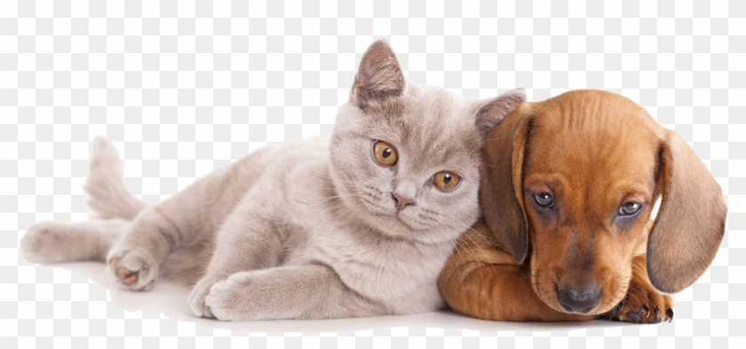 And Horse Sitting Pet Dog Together Cat Clipart Cat And Dog Hd Hd Png Download 1000x543 1847971 Pngfind