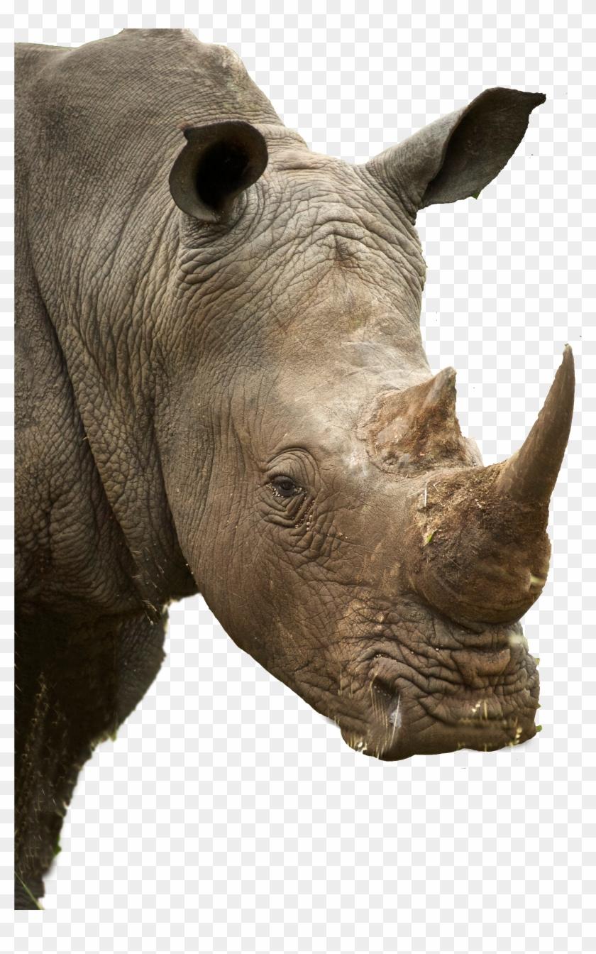 Rhino Profile, HD Png Download - 3550x5602(#198917) - PngFind