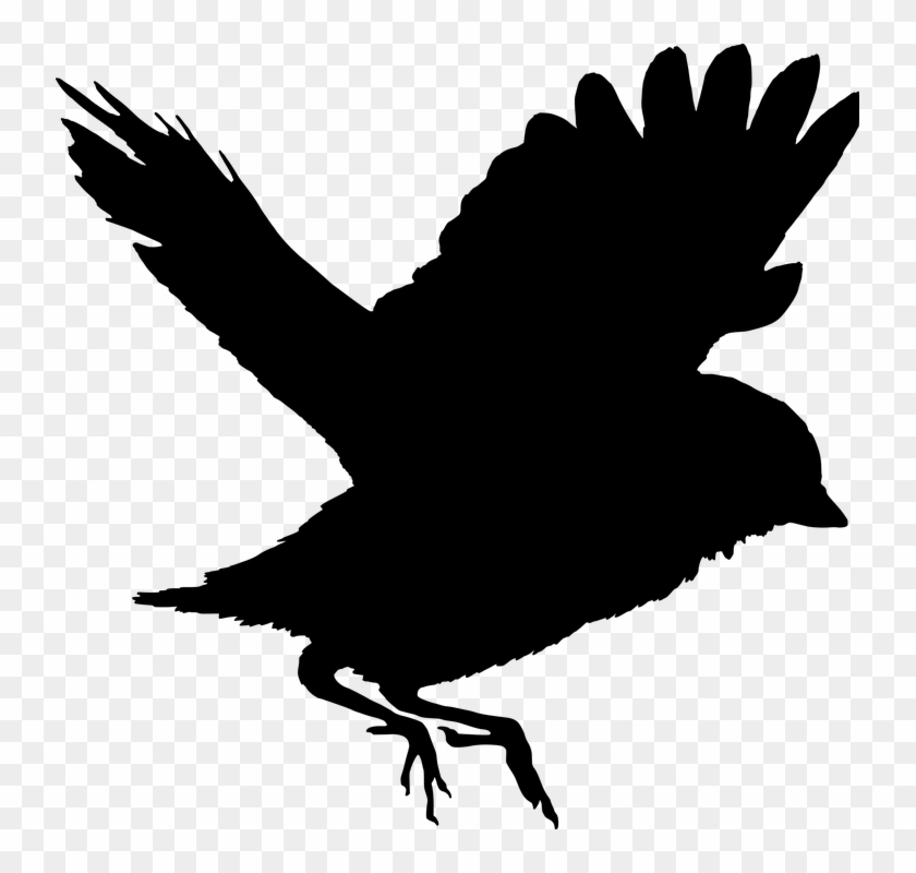 Freedom Fly Bird - Sparrow Png, Transparent Png - 737x720