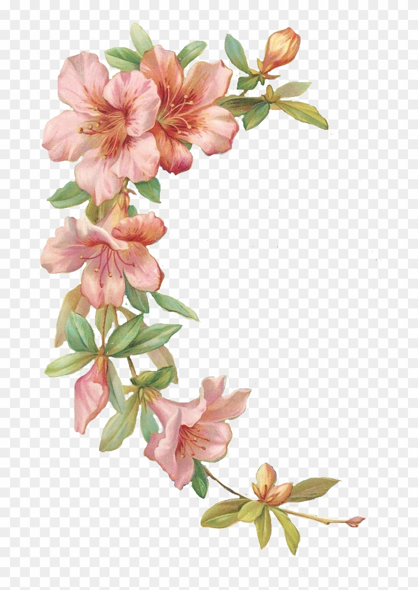Vector Free Library Azalea Drawing Flower Tattoo Marco De Flores Png Transparent Png 736x1145 1984007 Pngfind 105,997 imagens png transparentes em flores. marco de flores png transparent png