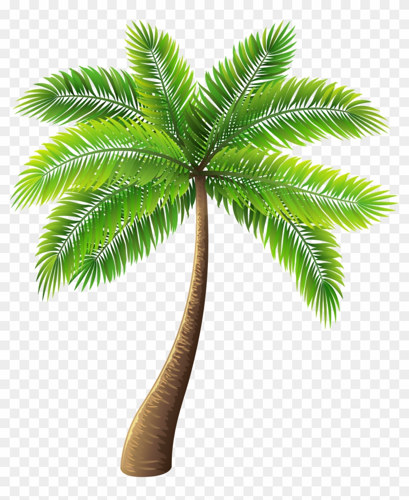 Palm Tree Png Clip Art - Palm Tree Png Transparent, Png