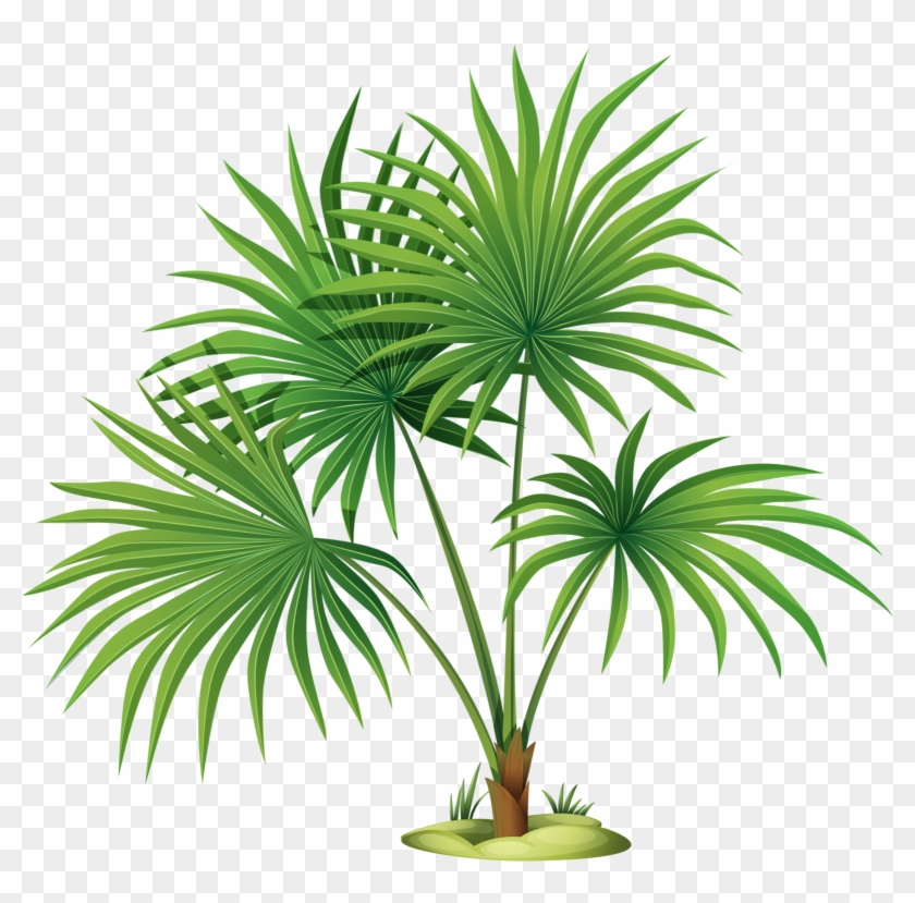 Palm Tree Leaves Clipart Png Download Transparent Png 1601x1504