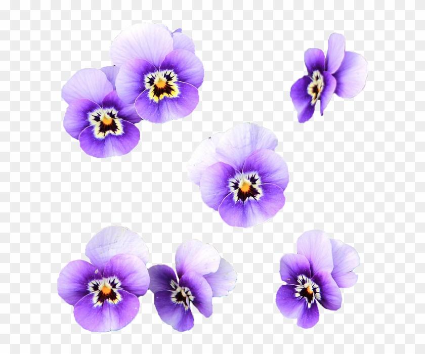 Fiori Png.Fiori Viola Png Flores Color Lila Png Transparent Png 750x720
