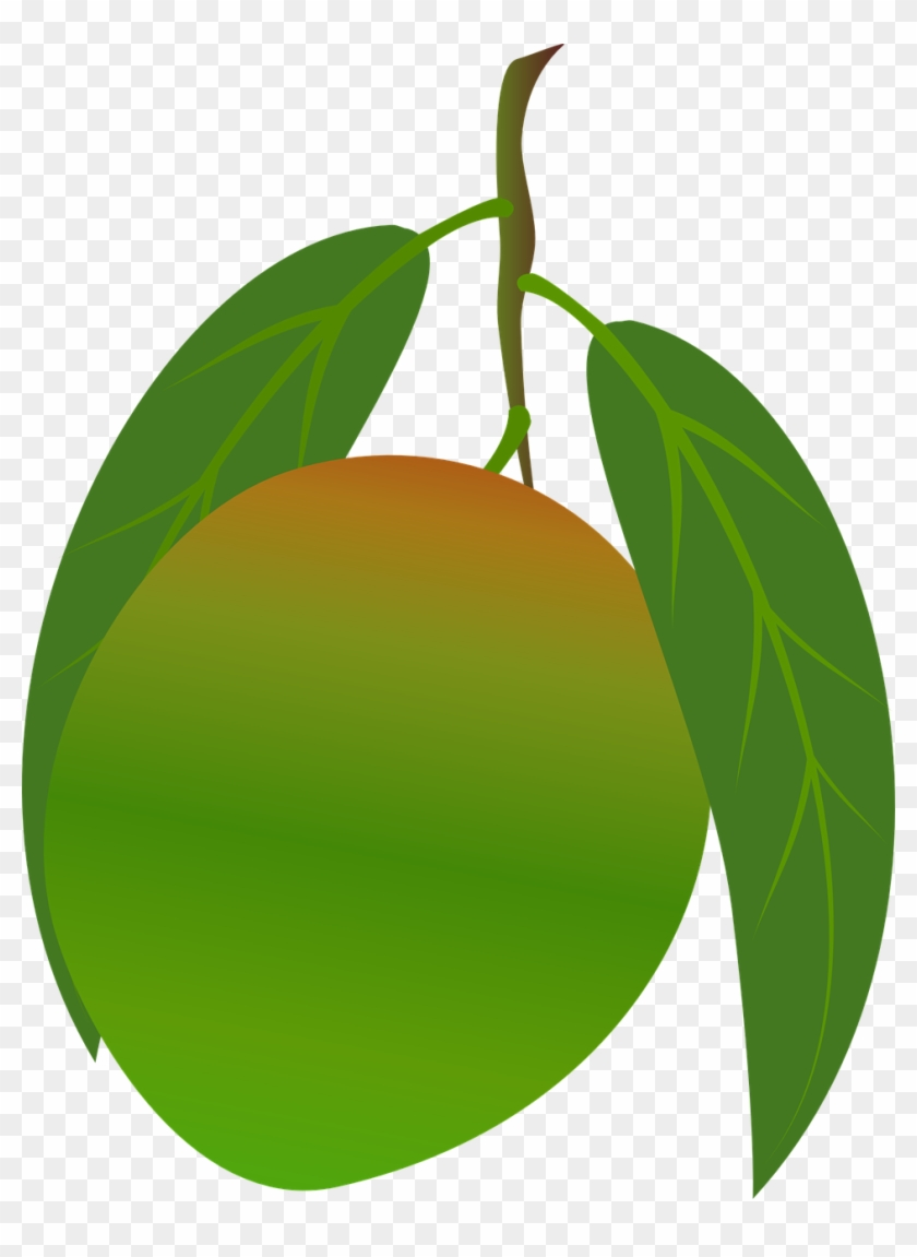 Mango Clipart Food - Green Mango Fruit Png, Transparent ...