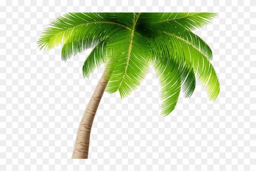 Palm Tree Clipart Kerala Coconut Tree Transparent Background Palm