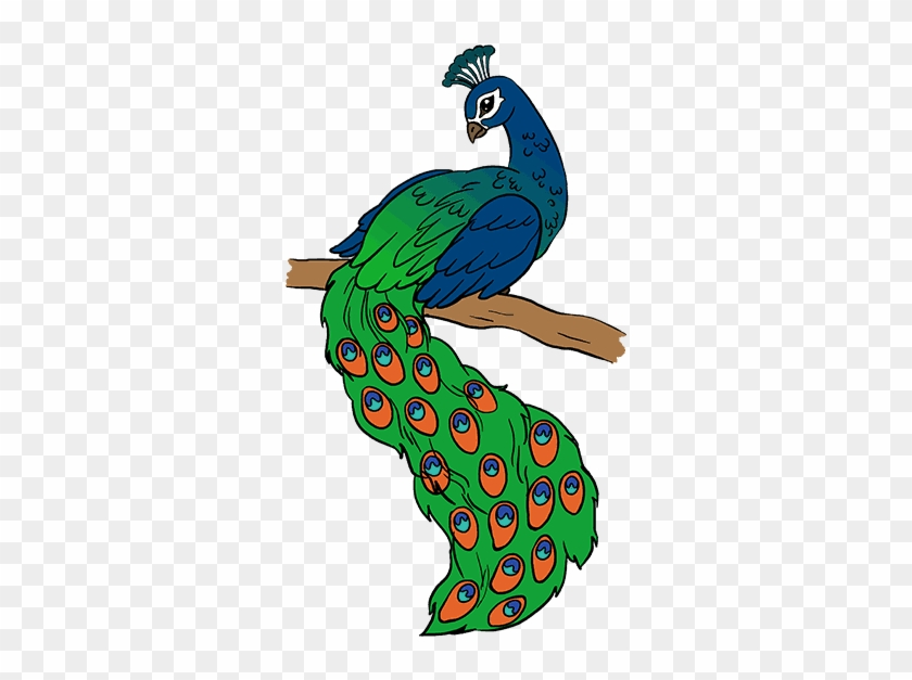 Bird Drawing Peacock Easy Drawing Of Peacock Hd Png Download 678x600 2127120 Pngfind