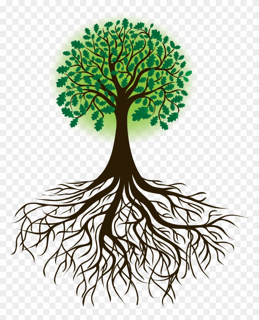 Family Tree Drawing Photo Tree With Roots Transparent Hd Png