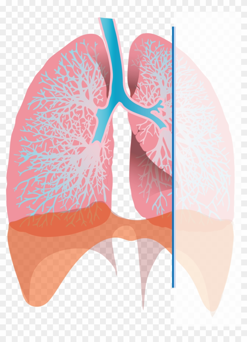 exhaling lungs , png download - diagram of inhalation, transparent png