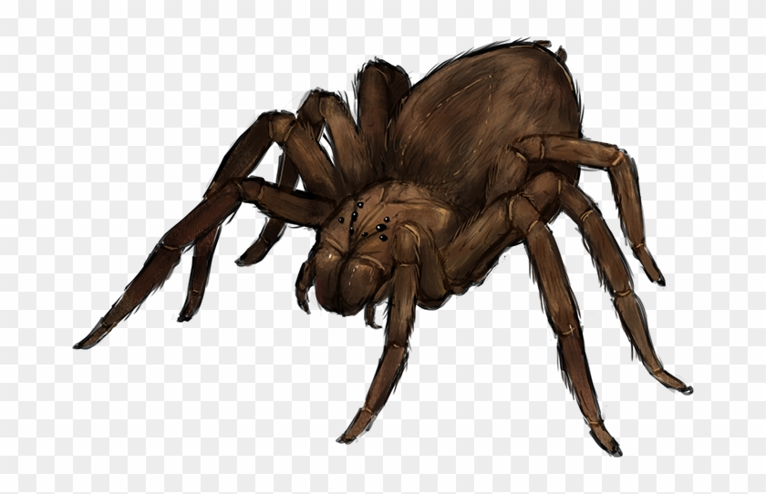 Giant Spider Png Giant Wolf Spider Png Transparent Png 682x462 2217840 Pngfind Choose from 2400+ spider graphic resources and download in the form of png, eps, ai or psd. giant wolf spider png transparent png