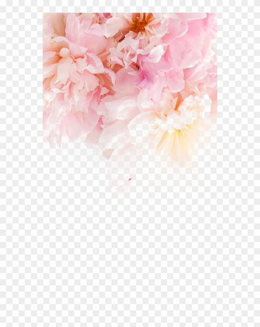 226 2268229 peonies wallpaper iphone bts jin wallpaper phone hd