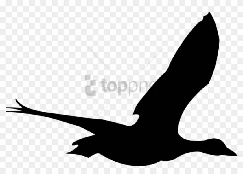 Free Png Flying Birds Animation Png Image With Transparent - Flying