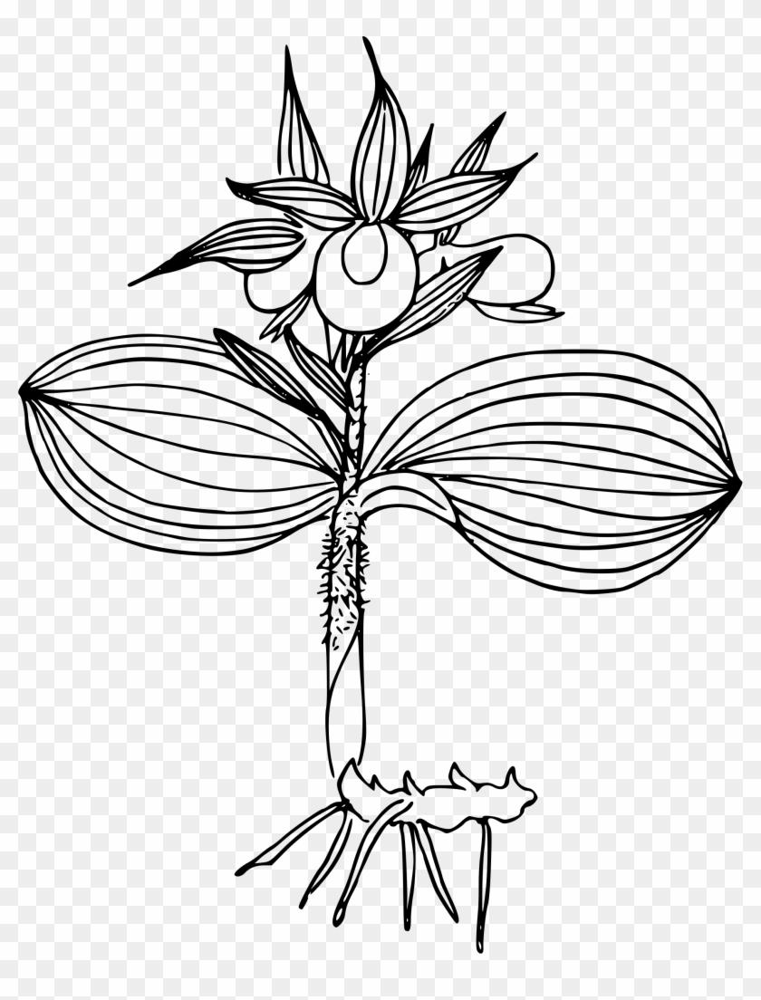 Bjp Logo Png Slipper Orchids Transparent Png 1894x24002331600