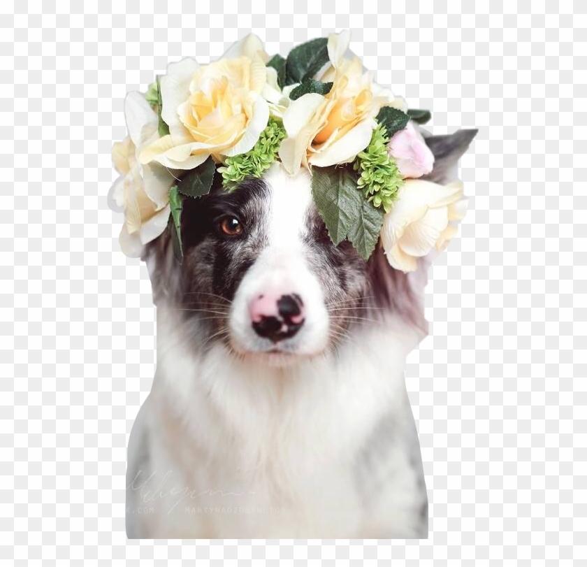 Download 64 Koleksi Wallpaper Tumblr Dog Gambar Paling Keren