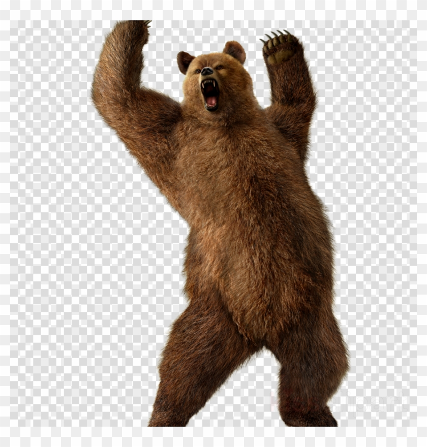 Bear transparent background. Download grizzly png clipart