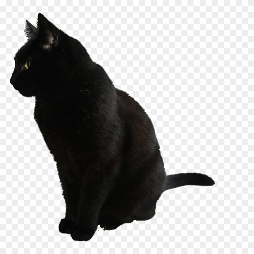 Best Free Cats Png Clipart , Black Cat No Background
