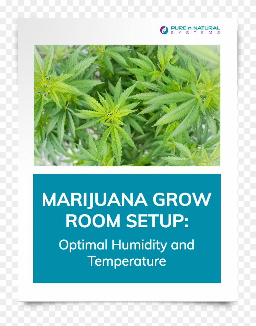 Grow Room Setup: Grow Room Setup-download Cover