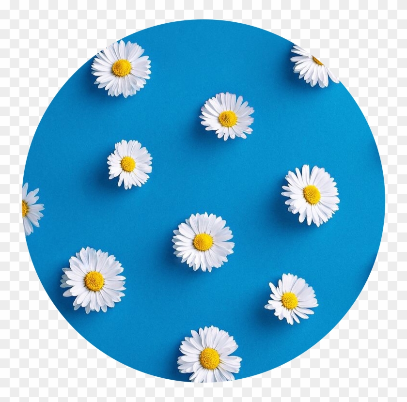 Pastel Cute Roblox Icon Blue Aesthetic Circle Icon Flower Blue Blueaesthetic Aesthetic Icons Blue Hd Png Download 750x750 2612028 Pngfind